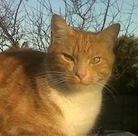 My cat Kitwe