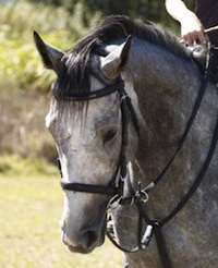 I found a beautiful horse to ride using the Be Do Have Principle