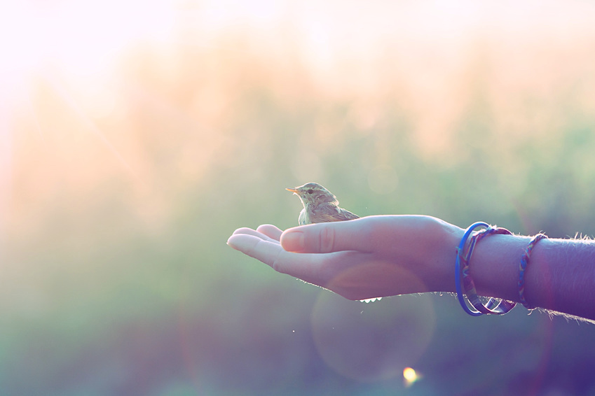 Open hand receiving the gift of a wild bird sitting in it without fear